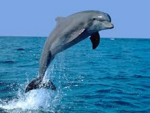 NATIONAL AQUATIC ANIMAL OF INDIA