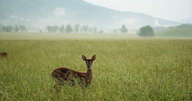 Popular Grasslands of the World